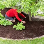 Best Mulch For Garden