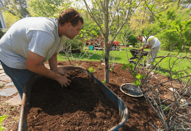 How To Mulch Around Trees And Shrubs