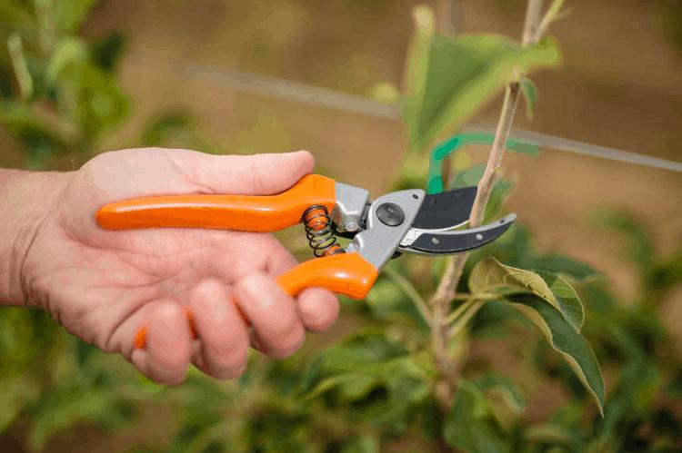 pruner for arthritic hands