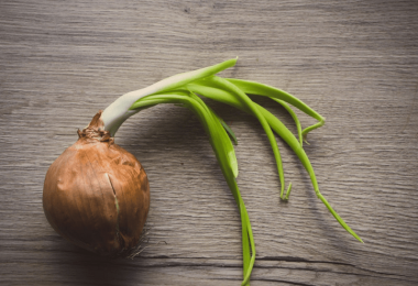 When to Plant Onions in Alabama
