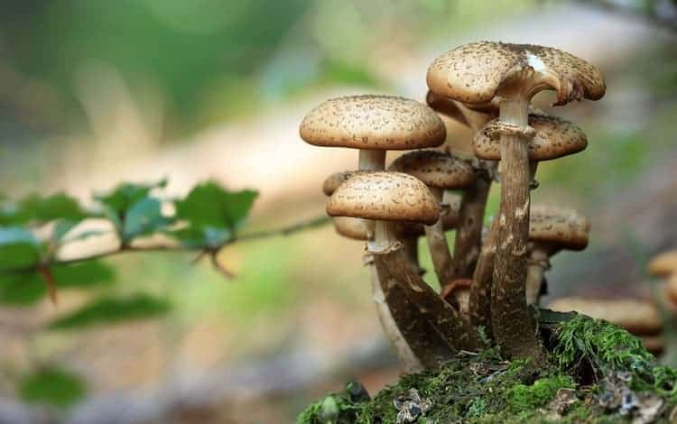 how to grow portobello mushrooms indoors