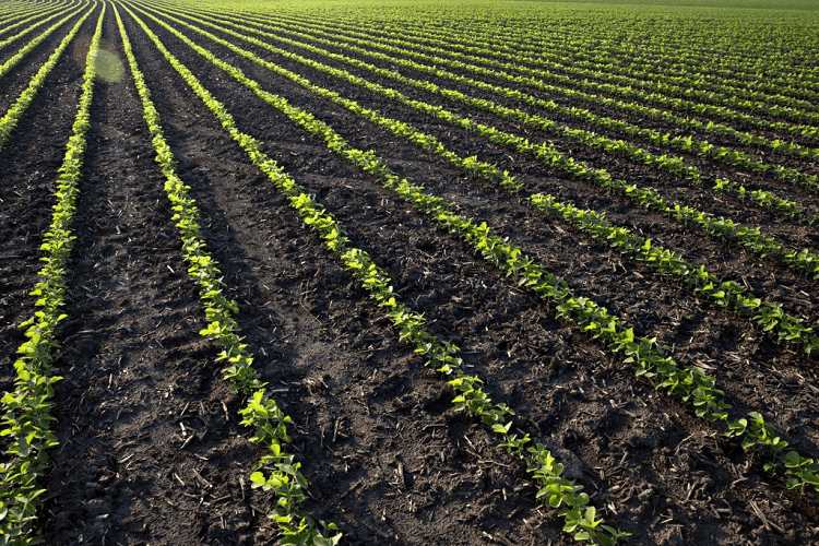 planting beans in alabama
