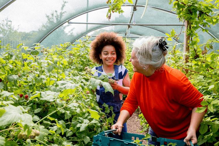Benefits of Companion Planting