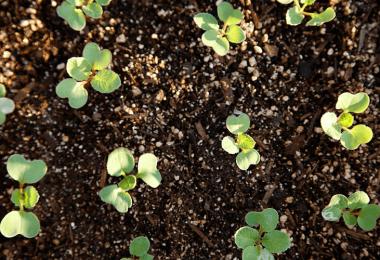 Perlite Vs Vermiculite (Key Differences)
