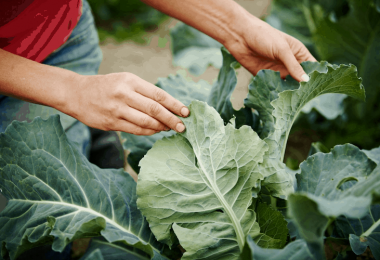 What Not To Plant with Kale