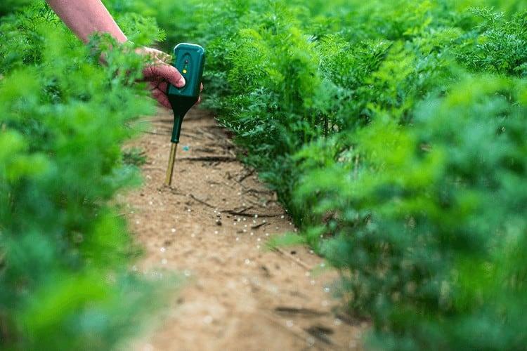 soil moisture meter reviews