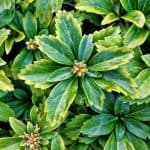Fast Growing Ground Covers for Slopes