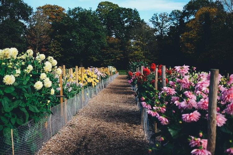 Flowerbeds retaining wall
