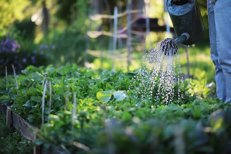 How Often Do I Water My Plants