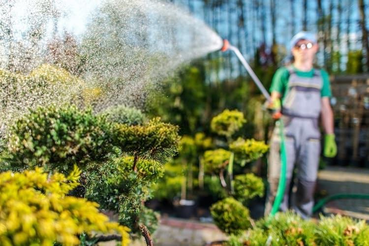 How to Water Some Popular Plants