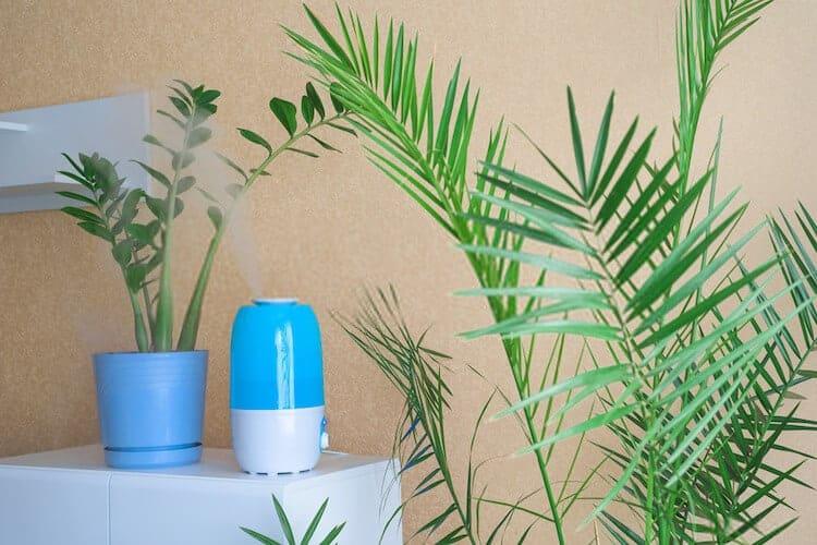 Plant Humidifier Reviews
