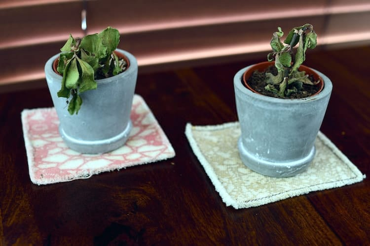 Signs of Overwatering Plants