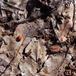 Types of Pest Resistant Mulch