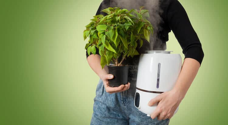 Types of Plant Humidifiers