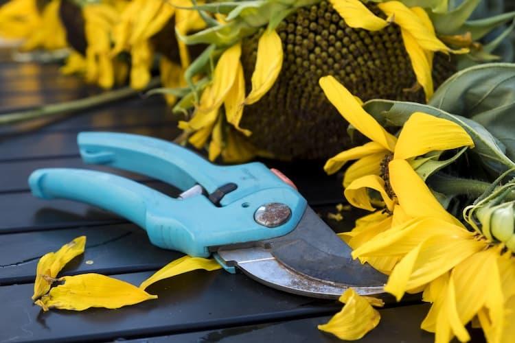 garden shears vs scissors