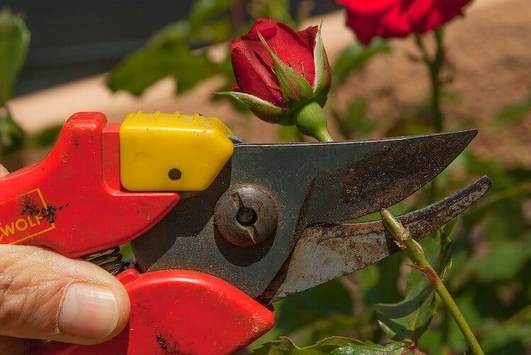 types of garden shears