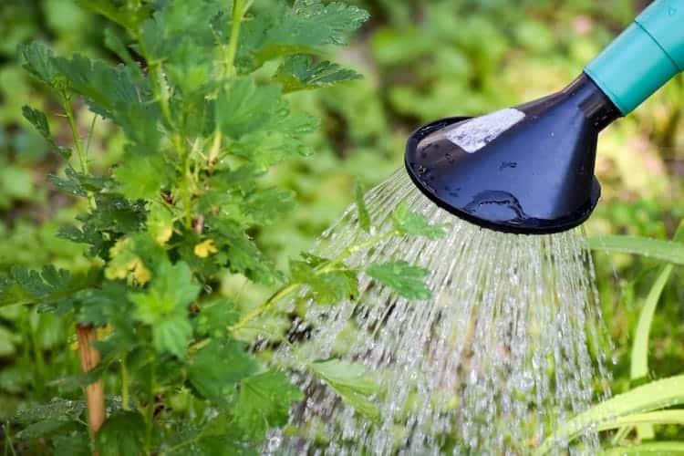 How Often Should I Water My Garden