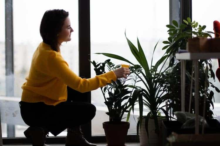 How Often Should You Water Indoor Plants