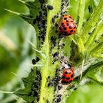How to Get Rid of Bugs in Garden Soil