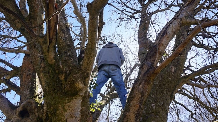 How to Prevent Tree Branches from Growing