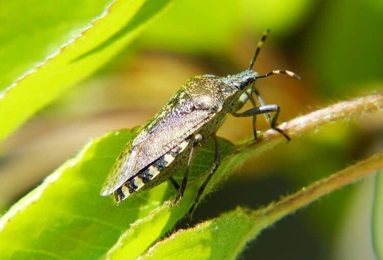 How to kill Bugs in Garden Soil