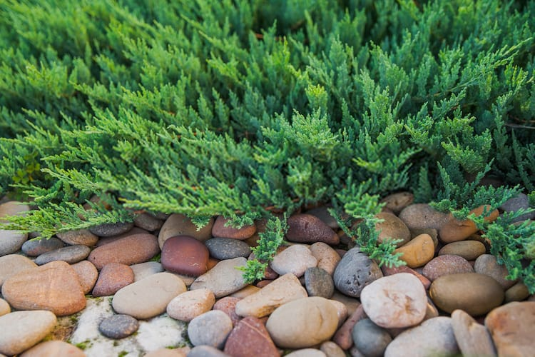 How to prevent Grass From Growing In Gravel