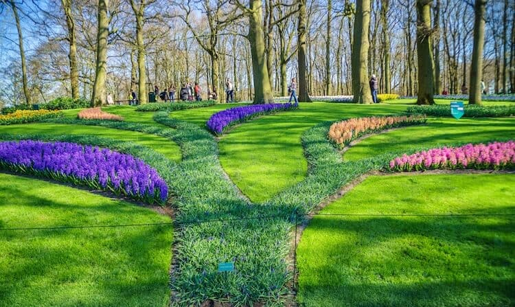 How to prevent lawn Grass from Growing Fast