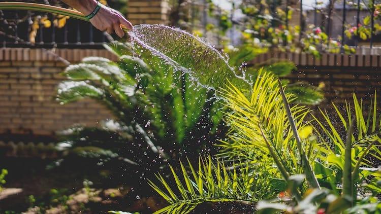 garden watering frequency