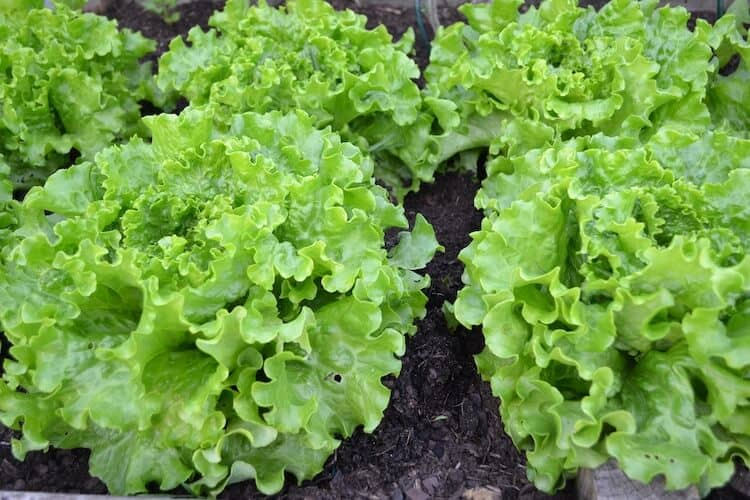 how long to veg plants before flowering