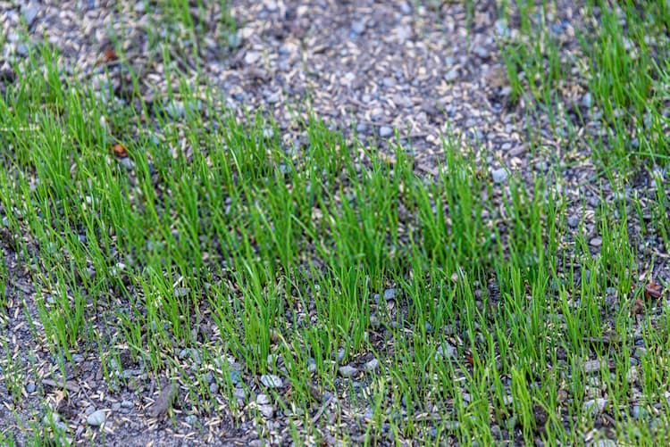 stopping grass from growing in gravel