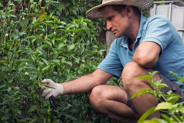 Herbaceous Plants vs Woody Plants