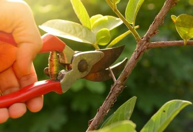 How Does Pruning Promote Growth?