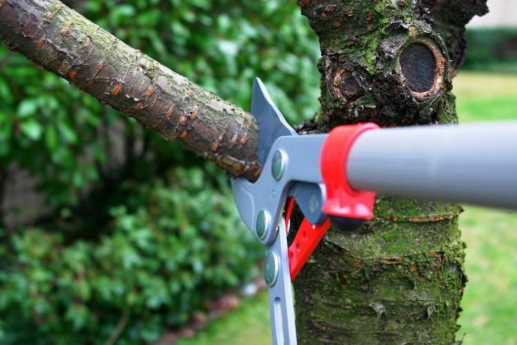 How to Fix an Over Pruned Tree