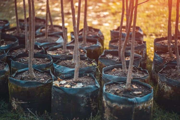 List of Fruit Trees That Grow From Cuttings