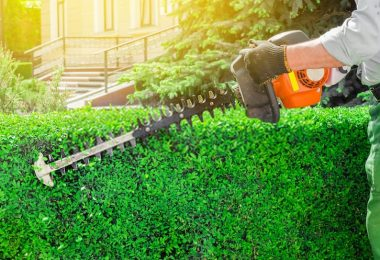Is It Ok To Trim Bushes In The Fall?