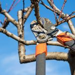 fixing overpruned plants