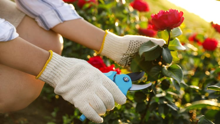 how pruning promotes plant growth