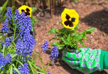 Are Pansies Poisonous to Cats?