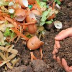 Compost Pile VS Bin