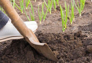 Drain Spade Vs Trenching Shovel   Key Differences