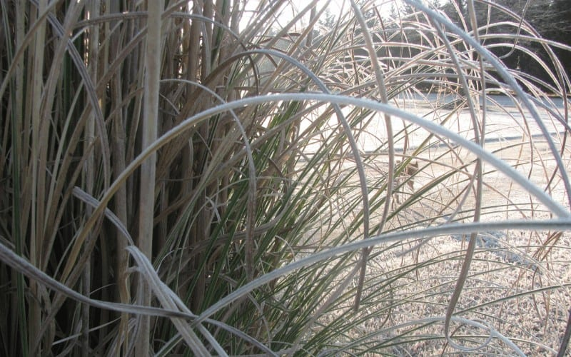 How Spraying Water On Plants Prevents Frost Damage
