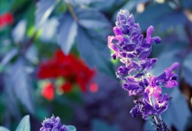 Is Bugleweed Toxic To Cats?