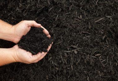 Is EZ Straw Safe for Vegetable Garden?