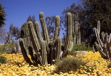 10 Different Types of Plants in The Desert