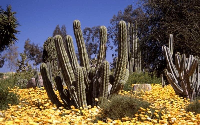 Types of Plants in The Desert