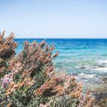 Types of Plants in the Ocean
