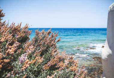 9 Different Types of Plants in the Ocean