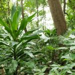 Types of Plants in the Rainforest