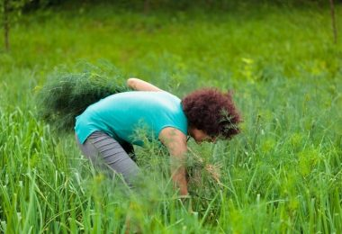 How To Harvest Dill Without Killing The Plant