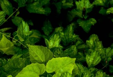 15 Plants That Grow in the Dark